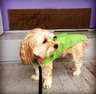 harvey in his rain coat